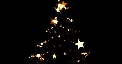 L'albero di Natale per il Vaticano 2019